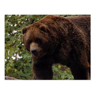 grizzly-bear-005 postcard