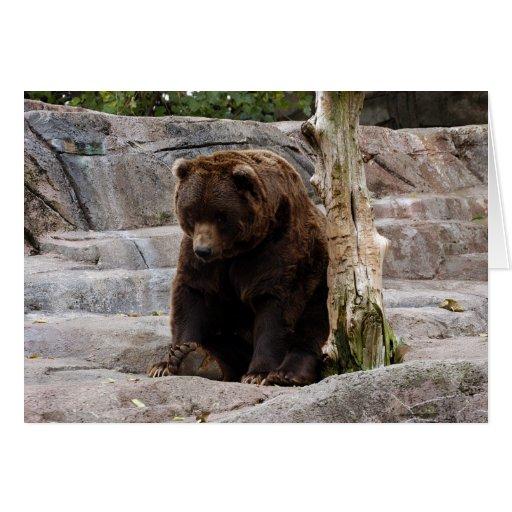 Grizzly Bear-010 Card