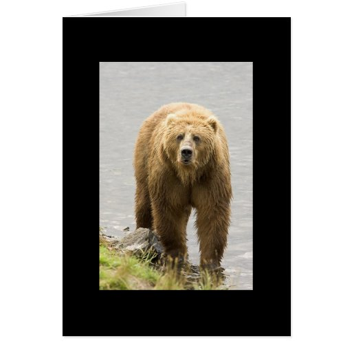 Grizzly Bear Blank Card