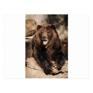 Grizzly Bear Boar Postcard
