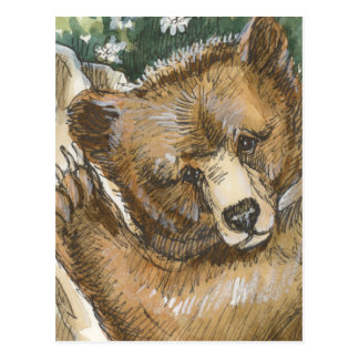 Grizzly Bear Cub and Tree Stump Postcard
