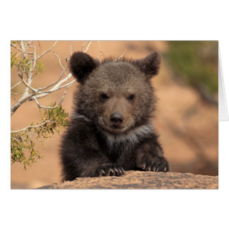 Grizzly Bear Cub Card