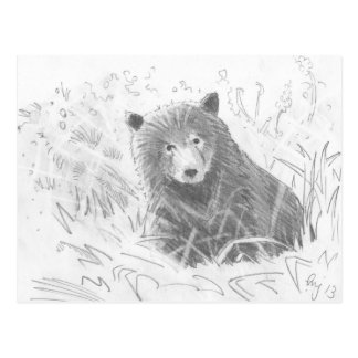 Grizzly Bear Cub Drawing Post Cards