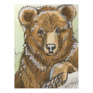 Grizzly Bear Cub Watching Postcard