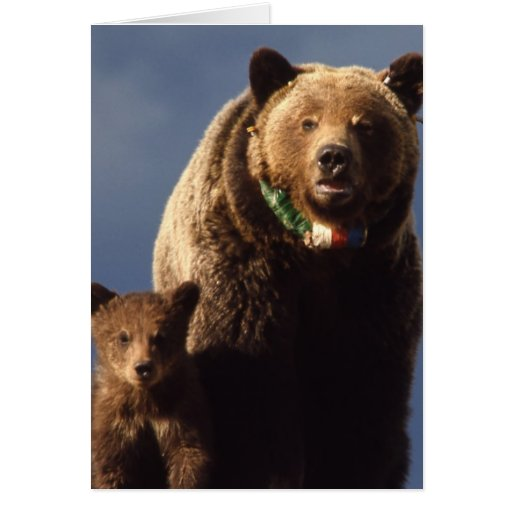 Grizzly Bear family Greeting Card