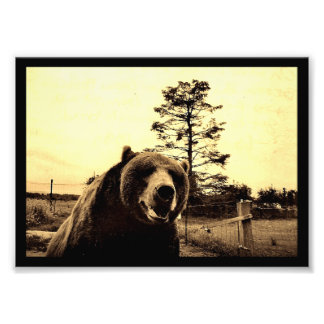 Grizzly Bear Greetings Photo Print