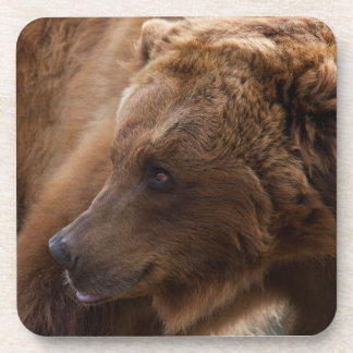 Grizzly Bear Hard Plastic Coasters (set of 6)