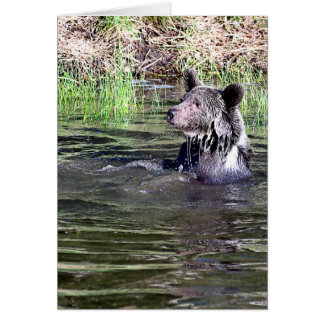 Grizzly Bear in the Water Greeting Cards