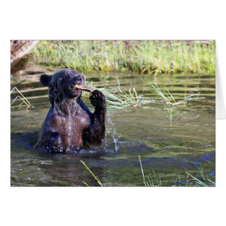Grizzly Bear in the Water Greeting Card