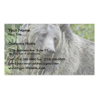 Grizzly Bear in Yellowstone National Park Business Card Templates
