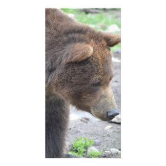 Grizzly Bear Photo Card