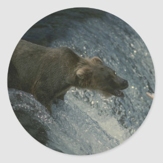 Grizzly Bear  Picture-Fishing for Salmon Classic Round Sticker
