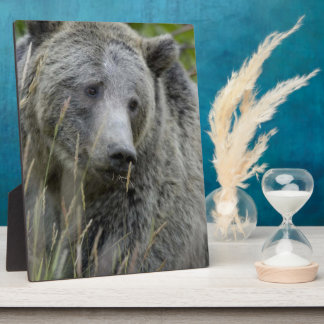 Grizzly Bear Plaque