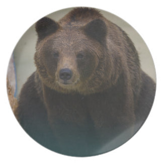 Grizzly Bear Plate