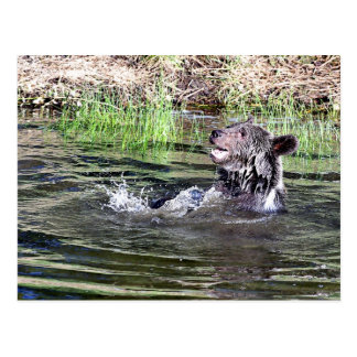 Grizzly Bear playing in the water Postcard
