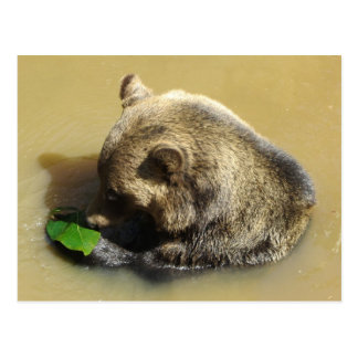 Grizzly Bear Playing with a Leaf Postcard