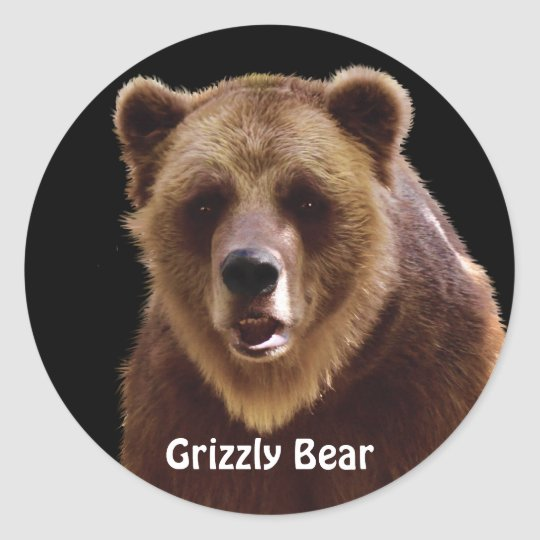 Grizzly Bear Portrait Wildlife Stickers