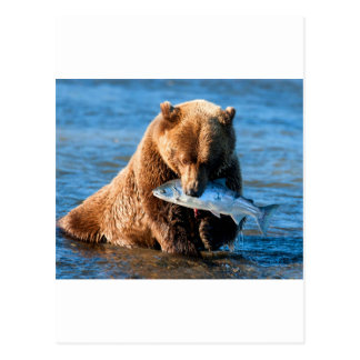 Grizzly Bear Postcards