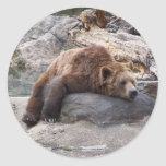 Grizzly Bear Resting On Rock Round Sticker