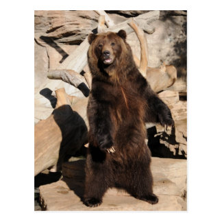 Grizzly Bear Sow Postcard