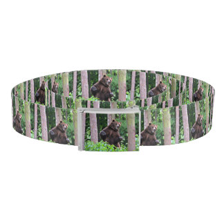 Grizzly Bear Standing Tall In The Woods Belt