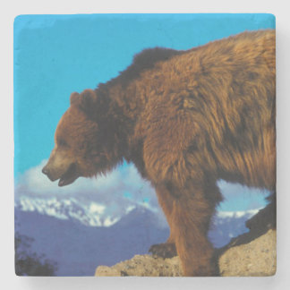 Grizzly Bear Stone Coaster