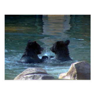 Grizzly Bear Swimming Party Post Cards