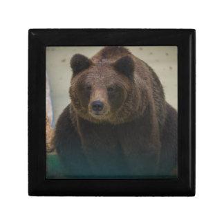 Grizzly Bear Trinket Box