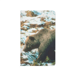 Grizzly Bear Winter Wildlife Nature Photo Journals