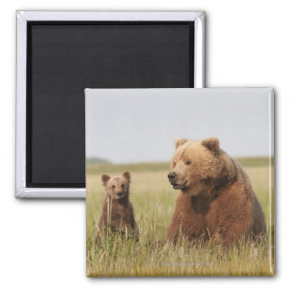 Grizzly Bear with Cub Square Magnet