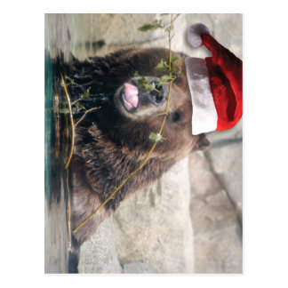 Grizzly Bear with Santa Hat Postcard