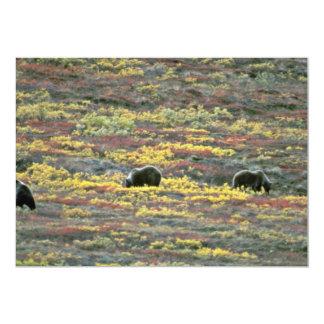 "Grizzly bears, Denali National Park, Alaska Red fl 5"" X 7"" Invitation Card"