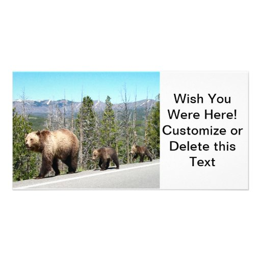 Grizzly Bears of Yellowstone Customized Photo Card