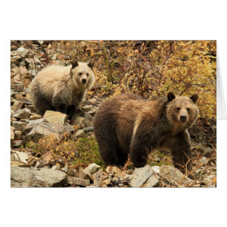 Grizzly Bears Out For A Walk Card