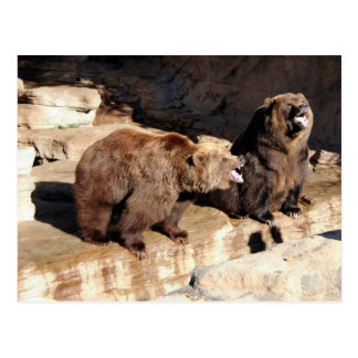 Grizzly Bears Postcard