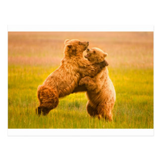 Grizzly Bears Wrestling Postcard