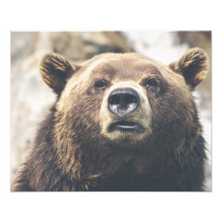 Grizzly brown bear art photo