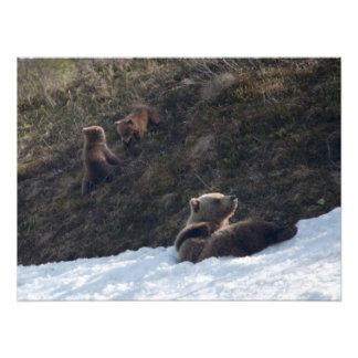 Grizzly Family Scene Art Photo