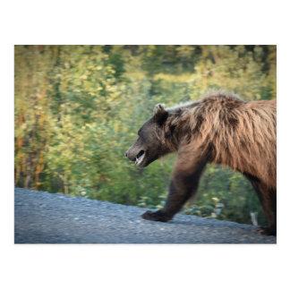 Grizzy Bear Yukon Canada Postcard