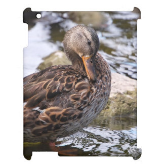 Grooming Duck Photo iPad Cases