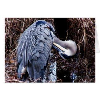 Grooming Heron Card