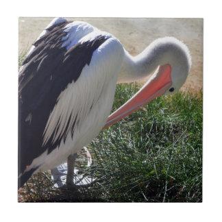 Grooming Pelican Tile