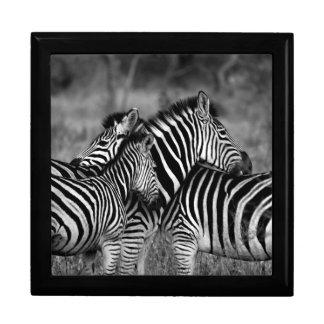 Grooming zebra gift box