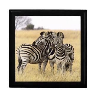 Grooming zebras gift box