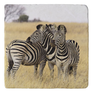 Grooming zebras trivet