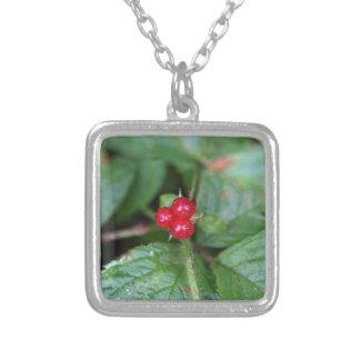 Groseille alpine (alpinum de Ribes) Collier