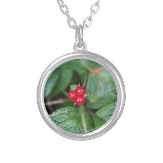 Groseille alpine (alpinum de Ribes) Pendentifs