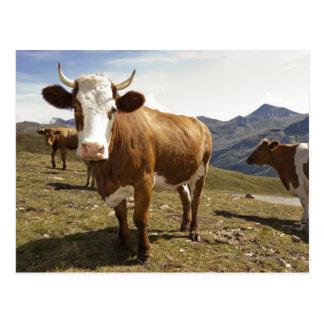 grossglockner hochalpenstrasse,hohe tauern, postcard