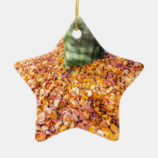 Ground around tree trunk covered with autumn leave ceramic star ornament