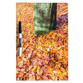 Ground around tree trunk covered with autumn leave dry erase board